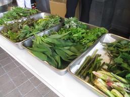 今年は11種類の「旬」山菜をご用意させて頂きました.JPG